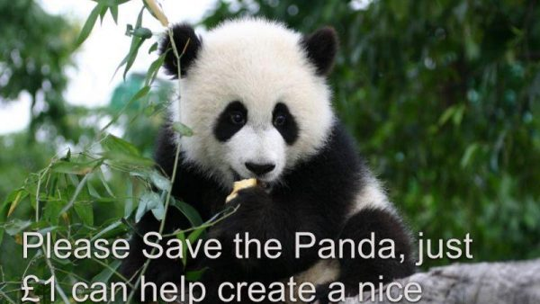 Alex save the giant panda large