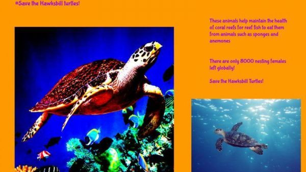 Emre save the hawksbill turtles large
