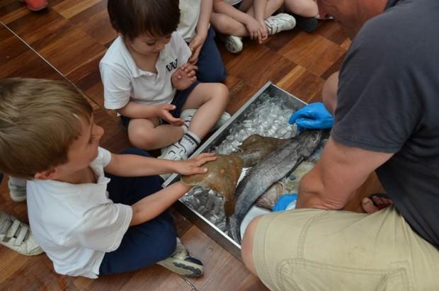 Wandsworth Prep School Community Fish Box Scheme