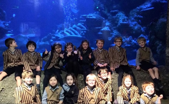 Video: Reception and Year 1 visit Sea Life