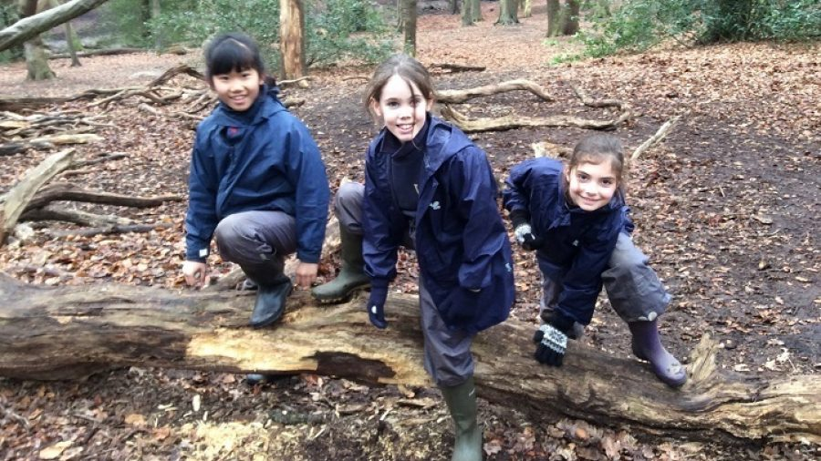Video: Upper School's Forest School adventures