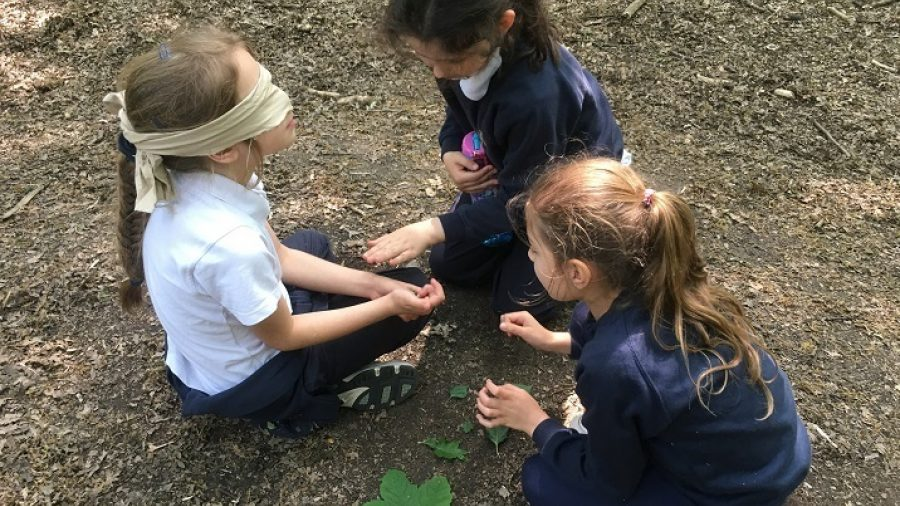 Forest School: Outdoor Science Learning