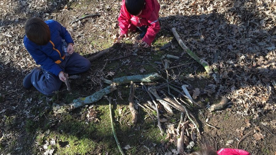 Discovering the Importance of Trees in Forest School