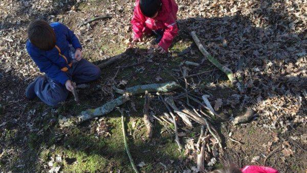 Lower School Discover the Importance of Trees